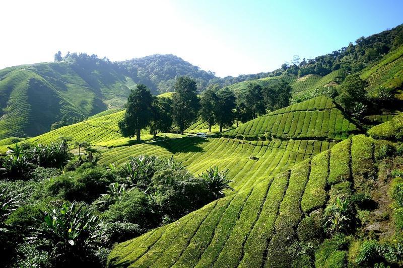 چرا باید با تور مالزی سفر کنیم