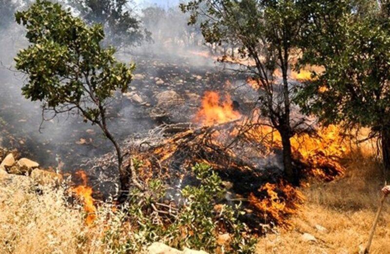 خبرنگاران دیده بانان جنگل های گلستان به حالت آماده باش درآمدند