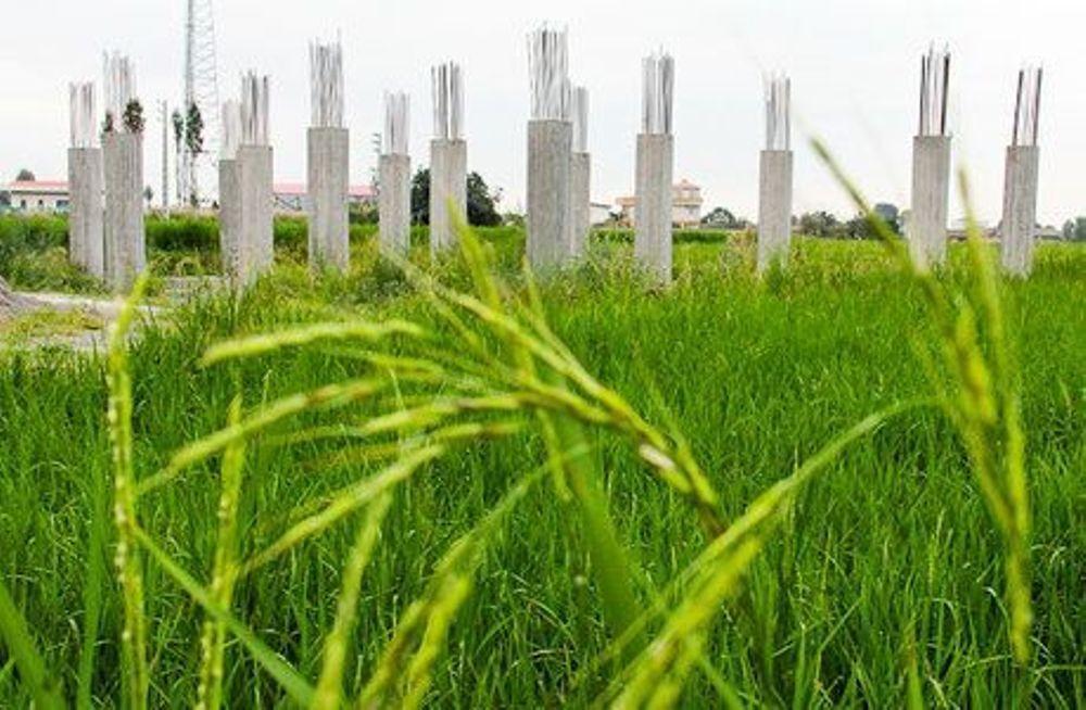 خبرنگاران معاون قوه قضاییه: امور اراضی با پدیده تغییر کاربری زمین های زراعی برخورد کند