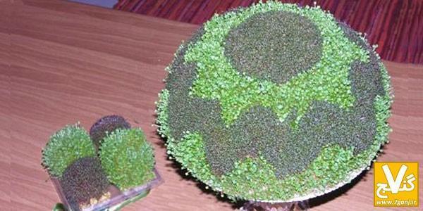 آموزش روش درست کردن سبزه دورنگ به 2 روش