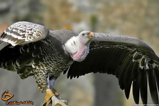 ترین های دنیای پرندگان ، گزارش تصویری